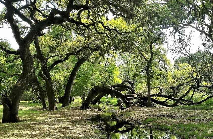 Garden Ridge, TX - Official Website   Official Website