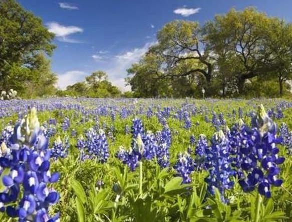 Garden Ridge, TX - Official Website | Official Website